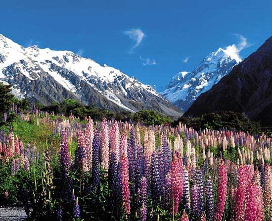 Nueva Zelanda 7